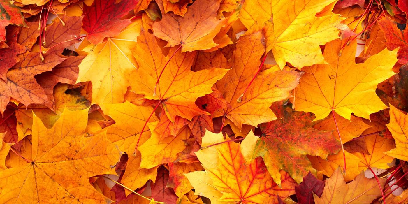 Autumn In Silverton, Oregon